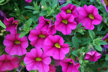 Las mejores flores de temporada para alegrar tu jardín